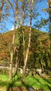 11-11-12-02.jpg